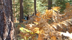 Shot through foliage of multi generation family in forest - stock footage