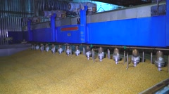 Barley grains preparing at a huge container for brewing process Stock Footage