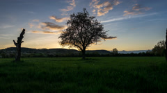 Homeland | Pear Tree Sunset Day to Night - stock footage