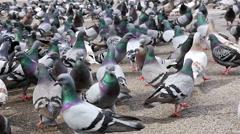 Pigeons walking in Placa de Catalunya, Barcelona - stock footage