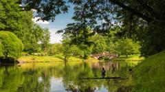 Sunny summer park landscape pond 4k timelapse Stock Footage
