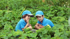 Two adorable little children, boy brothers, harvesting strawberries from a ba Stock Footage