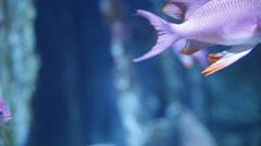 Fish inside the aquarium Stock Footage