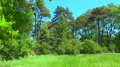 Panorama on the edge of the forest Stock Footage