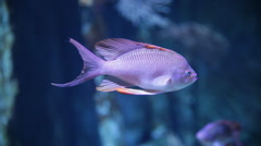 Fish inside the aquarium - stock footage