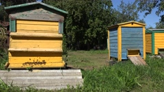 Worker bees flying to colorful hives houses in summer fruit apple tree garden Stock Footage
