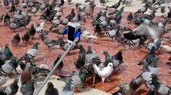 Flock of pigeons walking in Placa de Catalunya, Barcelona - stock footage