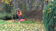 Leaves falling from maple tree and woman working with raker tool in garden. 4K Stock Footage
