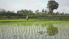 Beautiful view of Indonesian farmer throwing fertilizer before planting rice in  Stock Footage