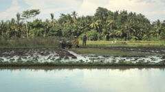 Traditional balinese farmer using tiller tractor in rice field near Ubud Bali Stock Footage