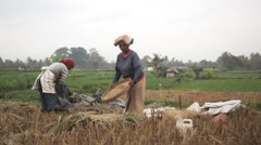 Indonesian farmer woman sifting rice by hand in the field during harvest in Ubud Stock Footage