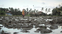 Balinese farmer ploughing a rice field  with a motor plow near Ubud Bali Stock Footage