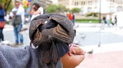 Pigeons eating from kid's hand in Placa de Catalunya, Barcelona - stock footage