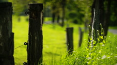Lockdown shot of fence by plants Stock Footage
