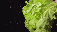 SLOW: A splash - Human hand shakes a lettuce bunch Stock Footage