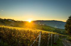 Beautiful vineyard in switzerland in blue sky Stock Photos