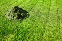 Heap of freshly cut grass on lawn Stock Photos
