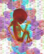 Digital composite of human fetus and DNA - stock illustration