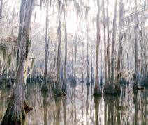 Swamp in Tennessee, USA Stock Photos