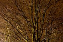 Tress illuminated by street lights at night - stock photo
