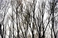 Silhouette of trees - stock photo