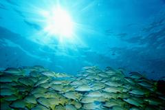 School of fish swimming underwater - stock photo