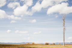 Bare tree on prairie, California, USA - stock photo