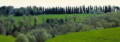Cypress trees, Tuscany, Italy - stock photo