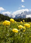 Mountain scenery with yellow flowers, Cortina d'Ampezzo, Italy Stock Photos
