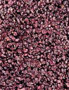 Pinot noir grapes Kuvituskuvat