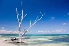 Tree on beach, Punta Allen, Yucatan, Mexico Stock Photos