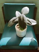 Potted plant on green vinyl chair Kuvituskuvat