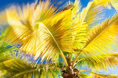 Palm tree moving in breeze Stock Photos