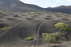 Grape vine in volcanic soil, Lanzarote, Canary Islands, Tenerife, Spain - stock photo