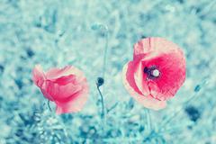 Retro stylized poppy flowers, shallow depth of field - stock photo