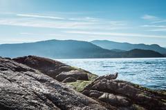 Seal on rocks, Whytecliff Park, British Columbia,Canada - stock photo