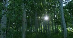Beautiful sunset sun rays through mountain Aspen forest DCI 4K - stock footage