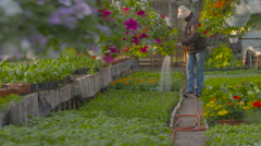 Farmer Spraying Water On Plants In Greenhouse - stock footage