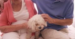Senior couple petting a dog Stock Footage