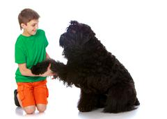 The dog gave his paw to the boy - stock photo