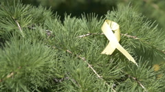 Yellow awareness ribbon ribbon on pine tree branch Stock Footage