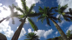 SLOW MOTION CLOSE UP: View from the bottom up of beautiful lush palm canopies - stock footage