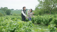 4K Farming couple walking through field & discussing crops Stock Footage