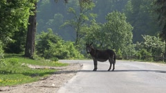 Donkey on the road Stock Footage