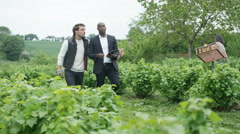 4K Businessman with computer tablet outdoors in field, negotiating with farmer.  - stock footage