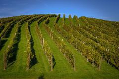 Winery Zlati gric, Slovenske Konjice, Slovenia, tourism and wine - stock photo