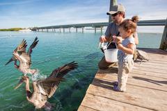 Father and daughter feeding pelicans and tarpons, Florida Keys, USA Stock Photos