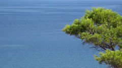 Green branch of pine tree and blue endless sea in background Stock Footage