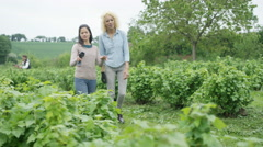 4K Cheerful farm workers walking together in field & discussing crops Stock Footage