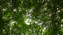 Wind moves branches in the forest Stock Footage